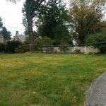 20201011_104645 back yard